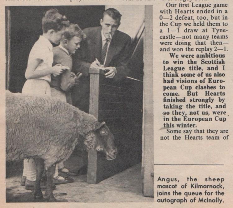 Killie sheep mascot