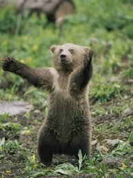 Bear does Broony